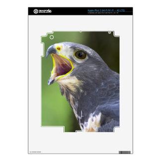 Portrait Of Jackal Buzzard (Buteo Rufofuscus) Decals For iPad 3