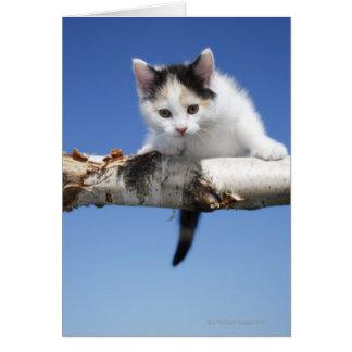 Portrait of Kitten Card