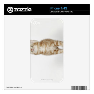 Portrait of kitten looking up iPhone 4S decal