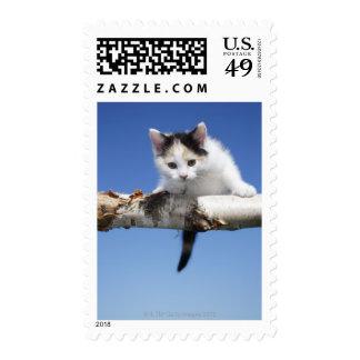 Portrait of Kitten Postage
