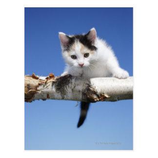 Portrait of Kitten Postcard