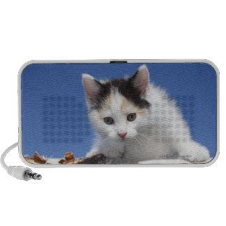 Portrait of Kitten PC Speakers