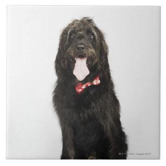 Portrait of Labradoodle dog Tile