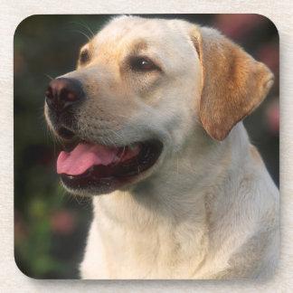 Portrait Of Labrador Retriever, Hilton Coaster