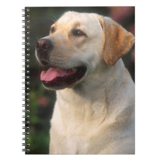Portrait Of Labrador Retriever, Hilton Notebook