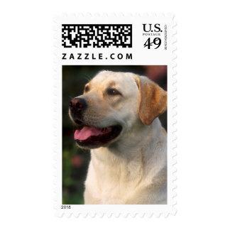 Portrait Of Labrador Retriever, Hilton Postage
