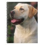Portrait Of Labrador Retriever, Hilton Spiral Notebook