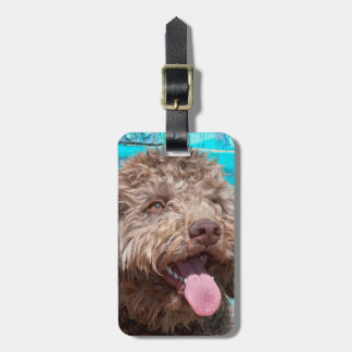 Portrait Of Lagotto Romagnolo In Front Of Blue Bag Tag