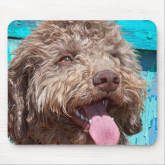 Portrait Of Lagotto Romagnolo In Front Of Blue Mouse Pad