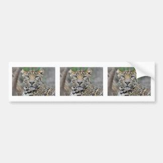 Portrait of Leopard Bumper Sticker