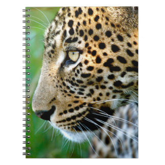 Portrait Of Leopard (Panthera Pardus) Notebook