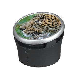 Portrait Of Leopard (Panthera Pardus) Speaker
