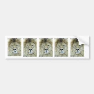 Portrait of lion bumper sticker