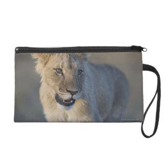 Portrait of Lion Cub (Panthera Leo), Namibia Wristlet Clutch