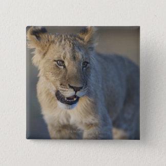 Portrait of Lion Cub (Panthera Leo), Namibia Button