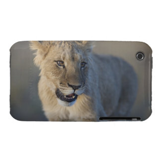 Portrait of Lion Cub (Panthera Leo), Namibia Case-Mate iPhone 3 Cases