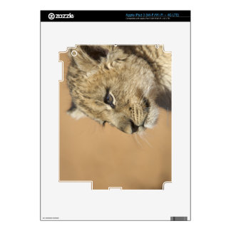 Portrait of Lion cub (Panthera Leo), Namibia iPad 3 Skin
