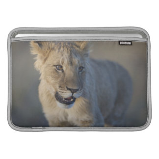 Portrait of Lion Cub (Panthera Leo), Namibia Sleeves For MacBook Air
