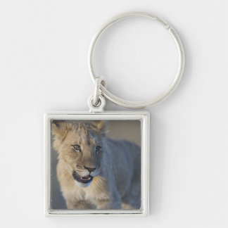 Portrait of Lion Cub (Panthera Leo), Namibia Keychain