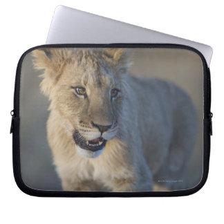 Portrait of Lion Cub (Panthera Leo), Namibia Laptop Sleeve