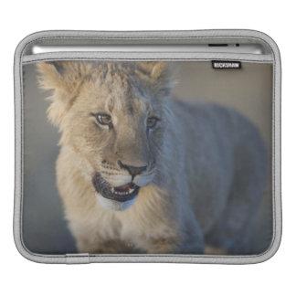 Portrait of Lion Cub (Panthera Leo), Namibia Sleeve For iPads