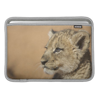 Portrait of Lion cub (Panthera Leo), Namibia Sleeve For MacBook Air