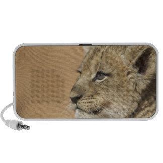 Portrait of Lion cub (Panthera Leo), Namibia Notebook Speaker