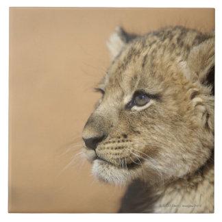 Portrait of Lion cub (Panthera Leo), Namibia Large Square Tile
