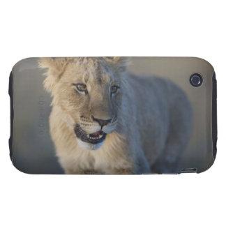 Portrait of Lion Cub (Panthera Leo), Namibia Tough iPhone 3 Cover
