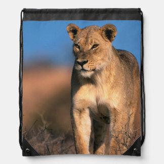 Portrait Of Lioness (Panthera Leo) Drawstring Bag