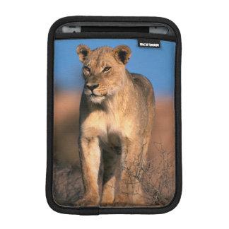 Portrait Of Lioness (Panthera Leo) Sleeve For iPad Mini