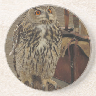 Portrait of long-eared owl . Asio otus, Strigidae Coaster