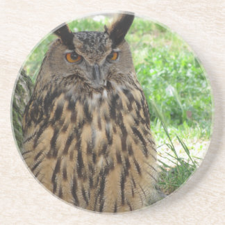 Portrait of long-eared owl . Asio otus, Strigidae Drink Coaster