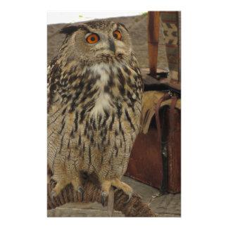 Portrait of long-eared owl . Asio otus, Strigidae Stationery