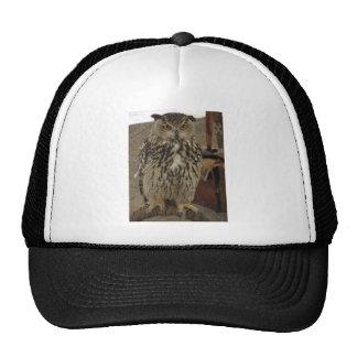 Portrait of long-eared owl . Asio otus, Strigidae Trucker Hat