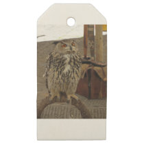 Portrait of long-eared owl . Asio otus, Strigidae Wooden Gift Tags