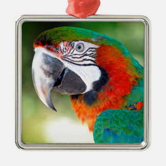 Portrait of Macaw Square Metal Christmas Ornament