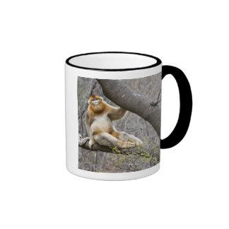 Portrait of male Golden monkey in tree Mug