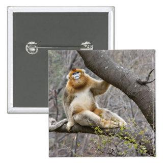 Portrait of male Golden monkey in tree Pinback Button