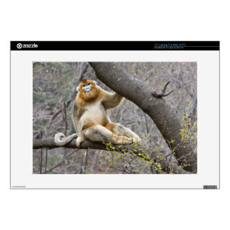 "Portrait of male Golden monkey in tree Skins For 15"" Laptops"