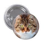 Portrait of Manx Cat Green-Eyed 1 Inch Round Button