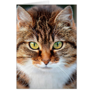Portrait of Manx Cat Green-Eyed Card