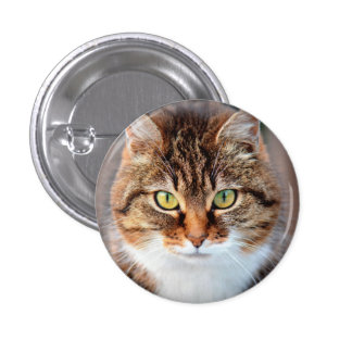 Portrait of Manx Cat Green-Eyed Pinback Button