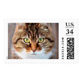 Portrait of Manx Cat Green-Eyed Postage Stamp