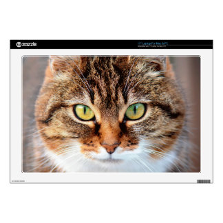 Portrait of Manx Cat Green-Eyed Skin For Laptop