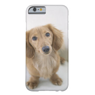 Portrait of Miniature Dachshund sitting, high Barely There iPhone 6 Case