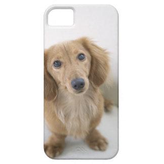 Portrait of Miniature Dachshund sitting, high iPhone SE/5/5s Case