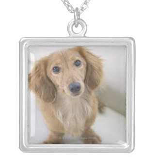 Portrait of Miniature Dachshund sitting, high Silver Plated Necklace