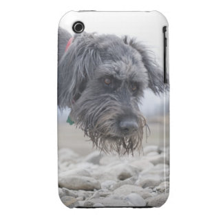 Portrait of mix breed dog, leaning over pebbles. Case-Mate iPhone 3 cases