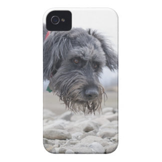 Portrait of mix breed dog, leaning over pebbles. Case-Mate iPhone 4 case